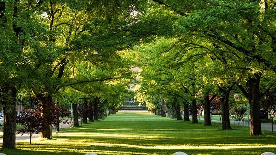 ANU campus Uni Ave